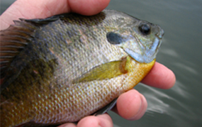 Many Anglers Spend Less Time Fishing than Desired