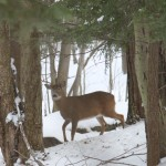 Southwick Deer Hunter Report