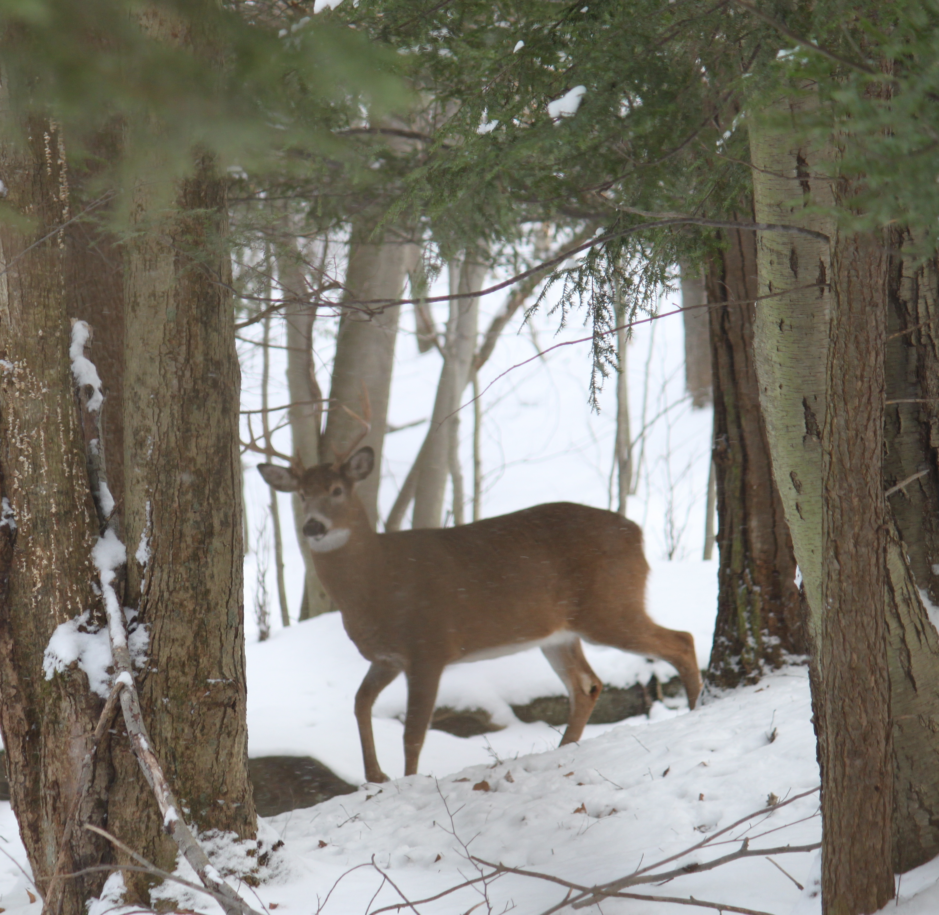Southwick Deer Hunter Report