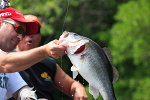 Southwick Associates Fish & Wildlife Economics & Statistics